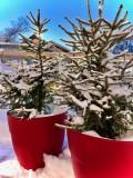 ext-neige-2-528