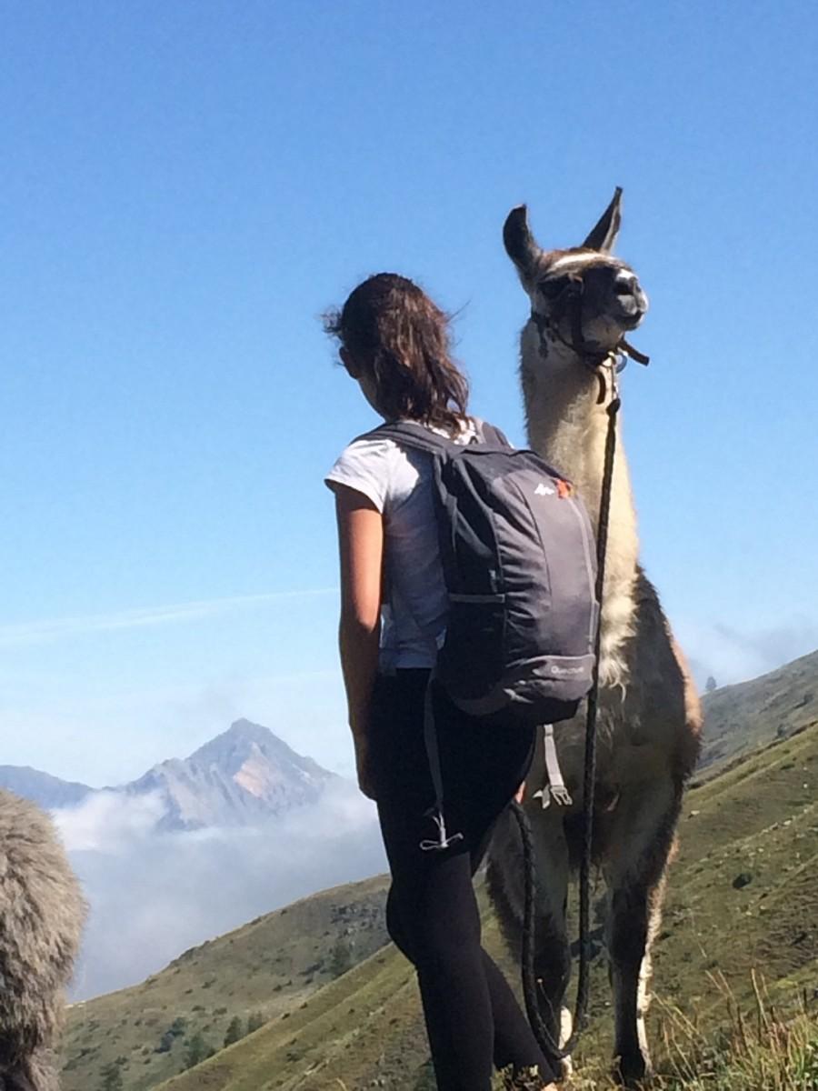 Balade lamas été Valloire, lamas valloire
