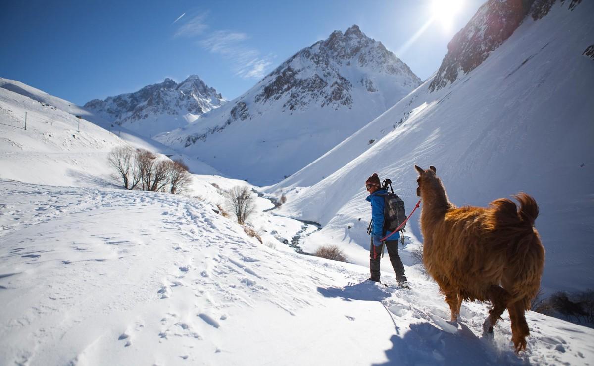 Balade lamas hiver Valloire, lamas valloire