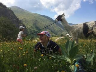 Balade en été avec les lamas à Valloire