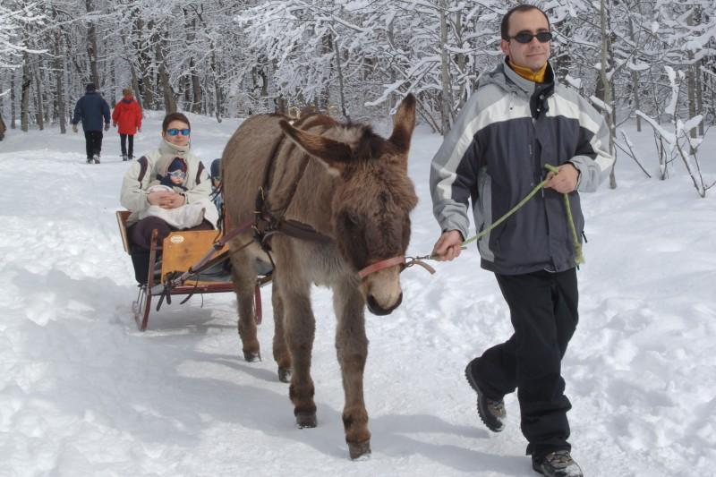 Promenade avec les ânes Valloire
